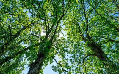 Creating awareness about the Earth's own Carbon Filters: Trees, shrubs & Flowers